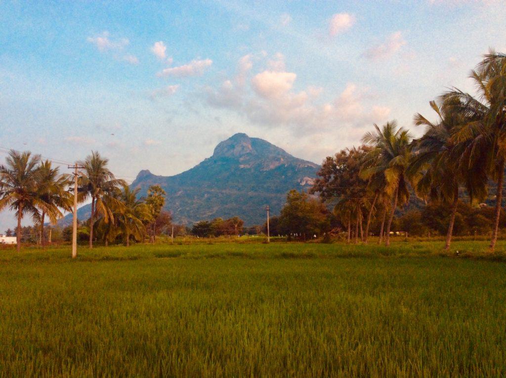 Der hoch verehrte Berg Arunachala in Tiruvanamalai